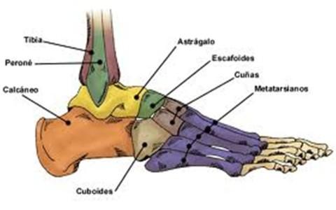 Fisiología de las articulaciones