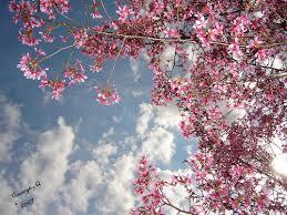 Was tun gegen Frühjahrsmüdigkeit?
