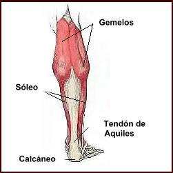 Descripción del tratamiento para lesiones musculares en gemelo